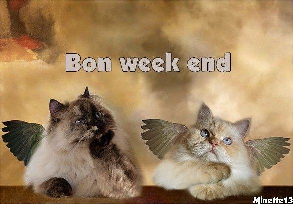 image de chat bon week end