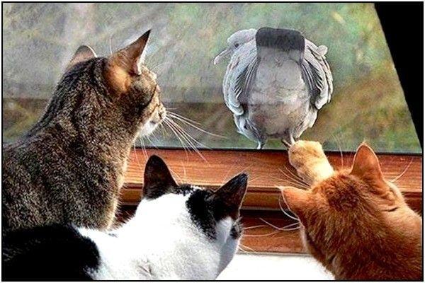 http://minette13.m.i.pic.centerblog.net/74fecfa8.jpg