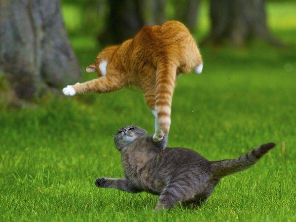 """Résultat de recherche d'images pour """"image animé de chat"""""""