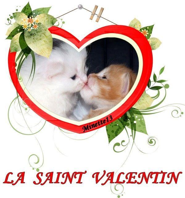 Résultat d'images pour st valentin pour chat