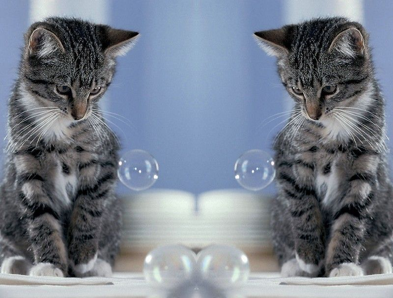 Chats effet miroir page 2 for Effet miroir photo