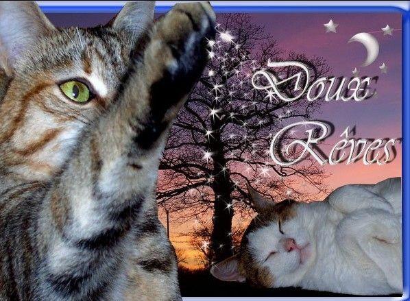 """Résultat de recherche d'images pour """"photos de chat bonne nuits"""""""